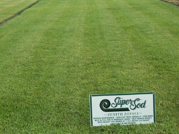 Lawns At Cooperseeds Com